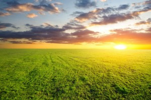 agricultural-green-field