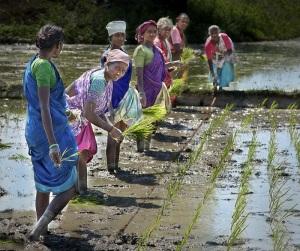 rural-india
